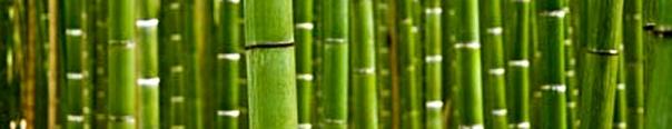 Bamboo Header