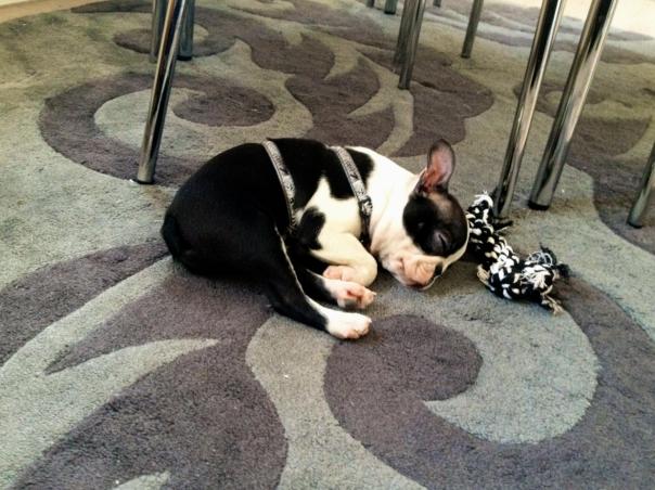 Oscar Sleeps