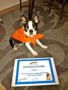 Zasman Vet Pre-School Puppy Graduate